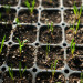 How to start healthy seedlings in your home