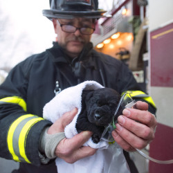 Bangor firefighter Brent Grover holds the pet oxigen mask for a puppy that was rescued from a house fire on Sidney Street in Bangor on Thursday afternoon.