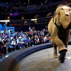 "An elephant performs in the pre-show entertainment at Ringling Bros. and Barnum & Bailey Circus' ""Circus Extreme"" show at the Mohegan Sun Arena at Casey Plaza in Wilkes-Barre, Pennsylvania, April 29, 2016."