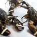 Why Sweden's call for an American lobster ban is an overreaction
