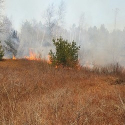 Maine forest rangers have an 11-acre wildfire near Pretty Pond in Washington County 95 percent under control as of 2:40 p.m. April 27.