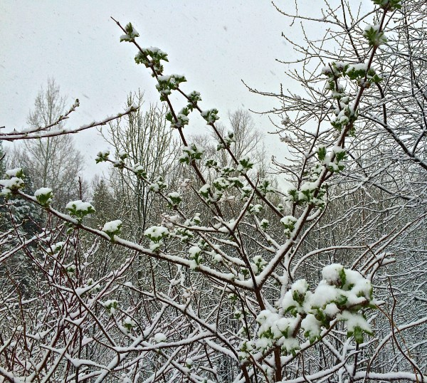 spring arrives maine will snow says weather service