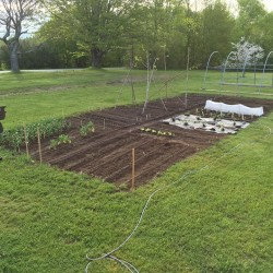 BDN reporter Abigail Curtis and her partner, Jim Clark, put in their garden in Belfast on May 21.