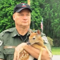 Game Warden Norm Lewis rescued a little fawn on Route 2 in Hanover after the animal was struck by a car.
