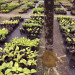 'Maine's shadiest nursery' delights in growing, selling woodland plants