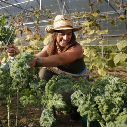 Hannah Semler, gleaning coordinator for Healthy Acadia, picks kale at Pat and Mike's Garden, a small farm in Ellsworth, Maine, Tuesday, Aug. 12, 2014.