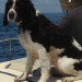Lobsterman rescues dog from water in Penobscot Bay