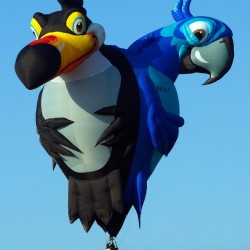 "The ""Tribirds"" balloon, depicting three South American birds, will fly in the 2016 Crown of Maine Balloon Fest, scheduled for Aug. 25-28. The balloon''s pilot is Marcos Bonimcontro of Sao Paulo, Brazil, who also designed and built the balloon."