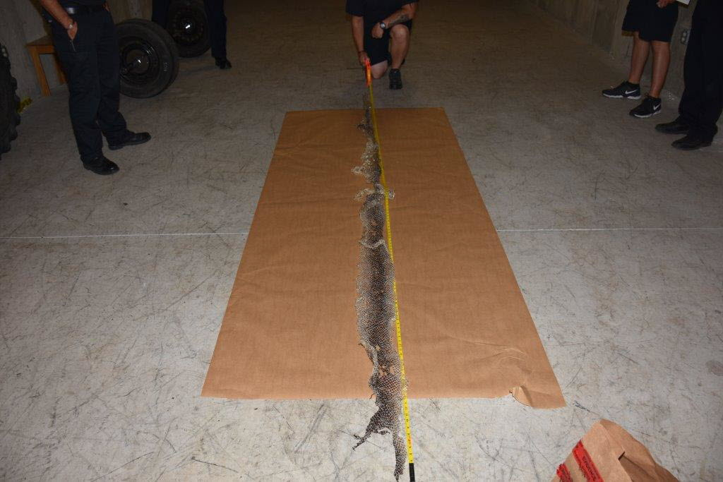 The snake skin found in Westbrook was more than 12 feet long