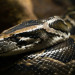 8 times Mainers freaked out over snakes
